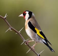 ¿Quién ha oído hablar de un pájaro que haya perdido su voz?