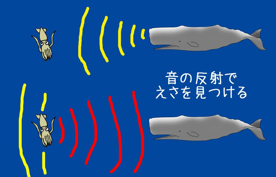 マッコウクジラの画像 p1_7