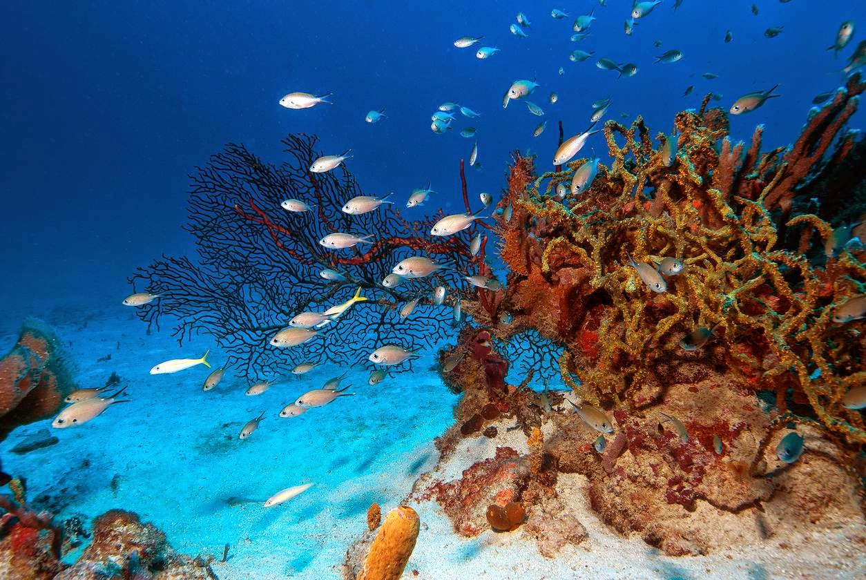 Coral reefs near Petit St. Vincent. Credit Richard Murphy