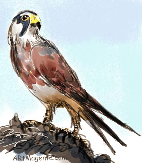 Hobby is a bird sketch by artist an illustrator Artmagenta
