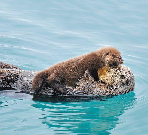 fotos de amor de animales - la energía, los animales, el amor, los animales Descargar