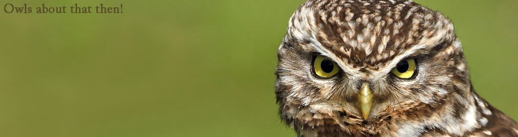 owls about that then!