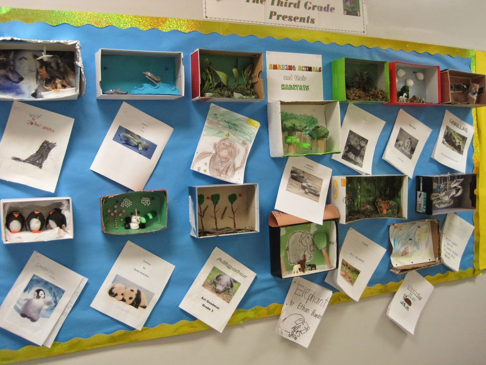 2nd grade animal habitat project pictures to pin on for Code habitat