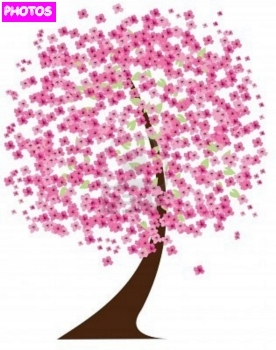 how to draw a blossom tree
