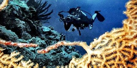 Sangalaki, Surga Bawah Laut di Kepulauan Derawan