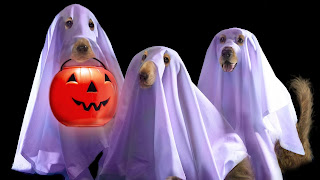 Halloween Funny Dog Ghost Wallpapers