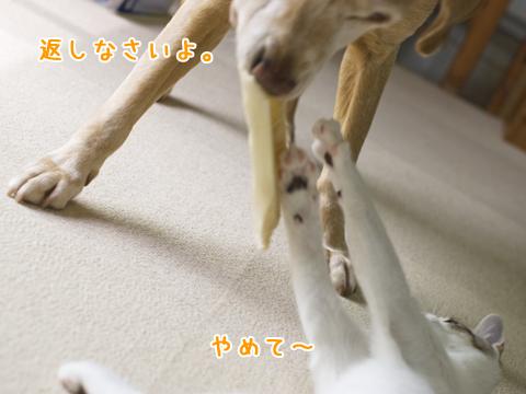 犬と子猫のケンカ