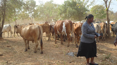 Ufugaji katika shamba la Rushu Ranchi Kisarawe
