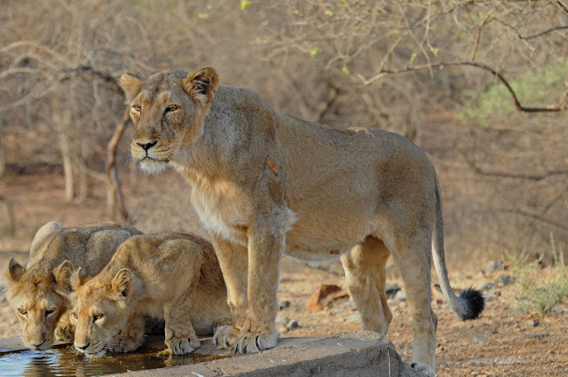voyage gir forest