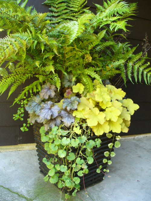 container gardening essay Container gardening of all sorts indoor & outdoor container gardens and tips to  make your potted garden a beautiful success | see more ideas about decks,.