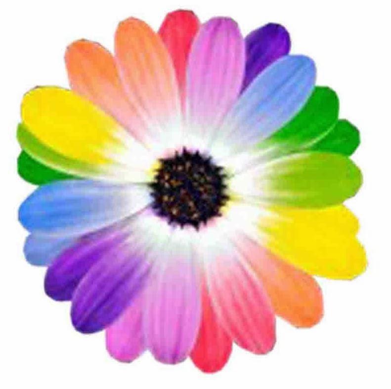 Naylamp Abracitos: Cuento: La Flor Multicolor