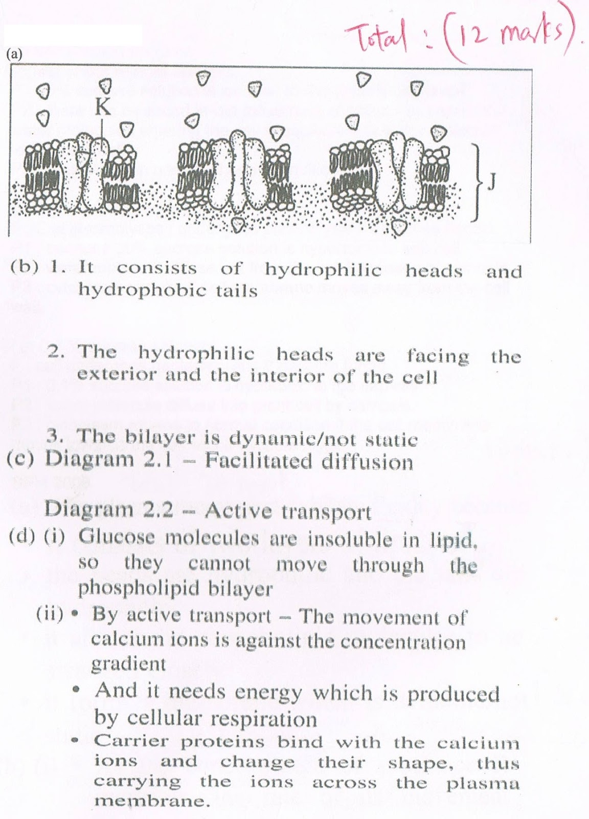 write essay question cell division