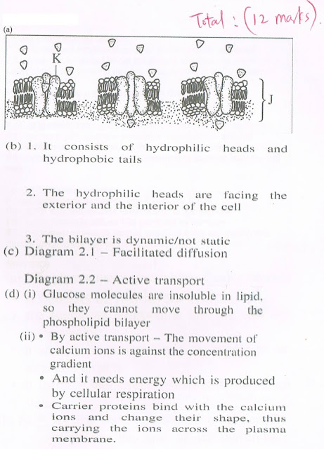ap biology essay question and answer