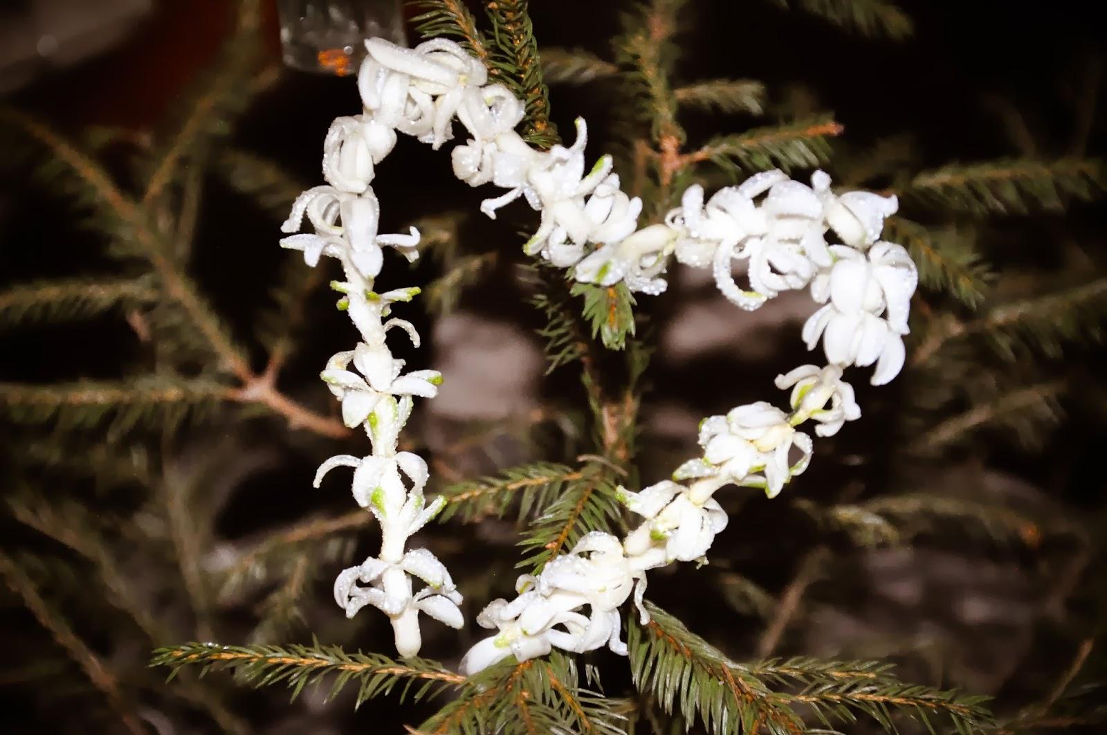 Inspirerande Blommor & Dekor