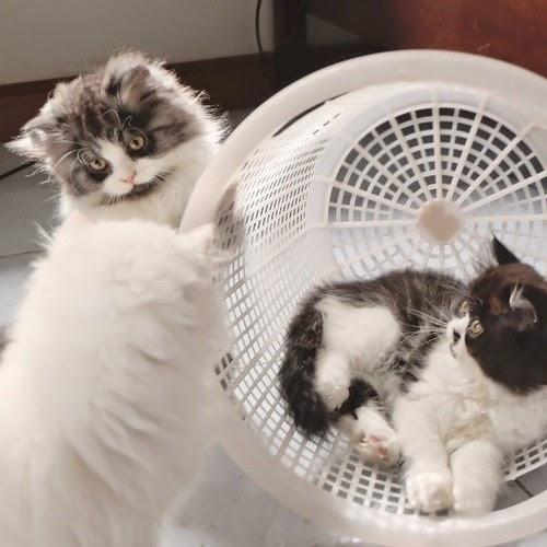 Смешные коты - День стирки