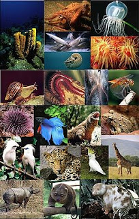 Pengertian Hewan Herbivora, Karnivora dan Omnivora