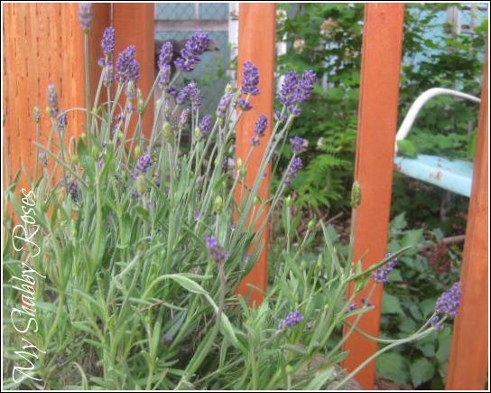 Patina Gardening
