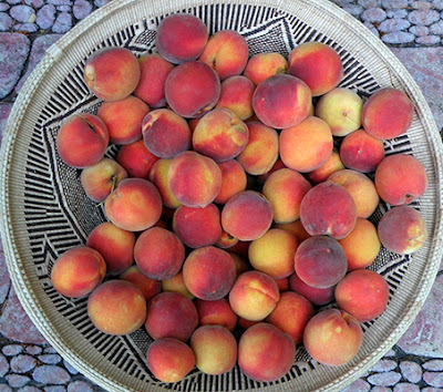 Large Basket of Peaches Picked in Local Parking Lot