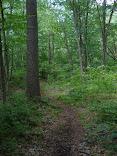 The Mushroom Trail