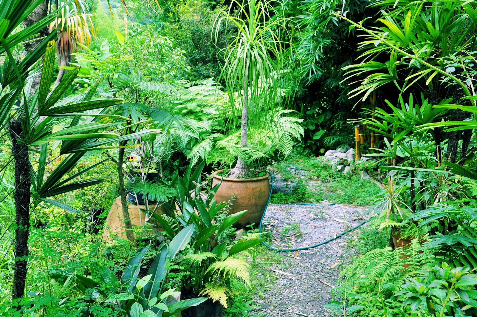 Directorio tlapacoyan vivero y venta de plantas a orillas for Viveros de plantas de ornato