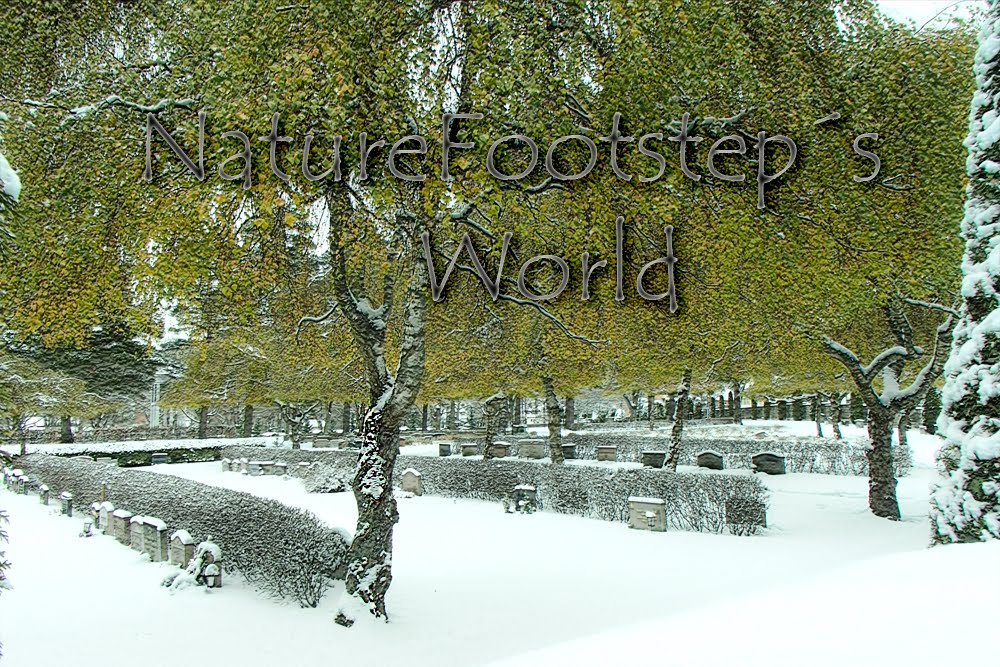 NatureFootsteps World