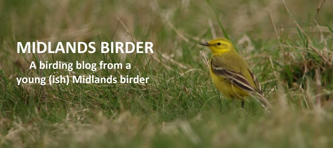 MIDLANDS BIRDER