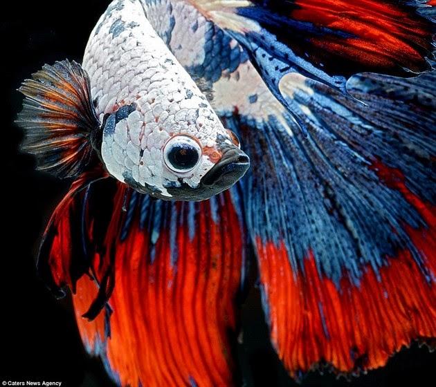 color-fish-4