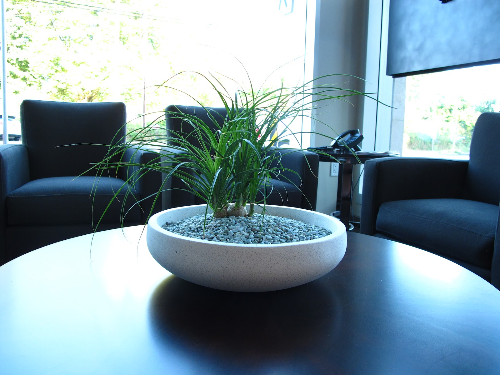 Keona Wiley: Re/Max Phase Two - Floor Plants
