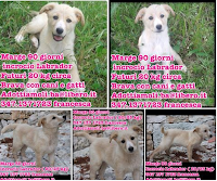 cane adozione Puglia