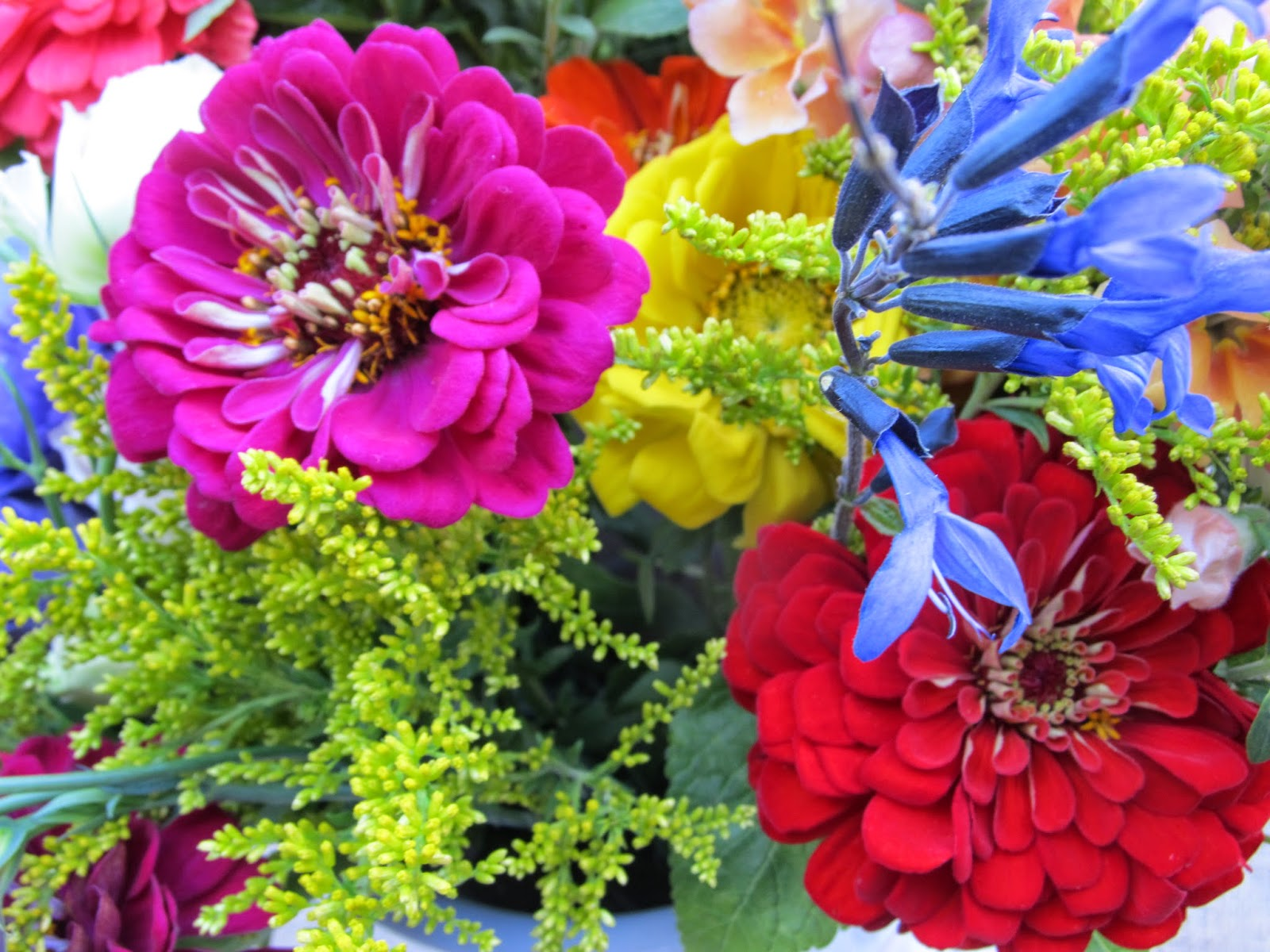 Notes and News from Shady Grove Gardens September Random s flowers