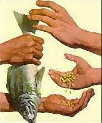 Berburu Ikan
