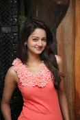 Cute Shanvi Glamorous Photos Gallery-thumbnail-4
