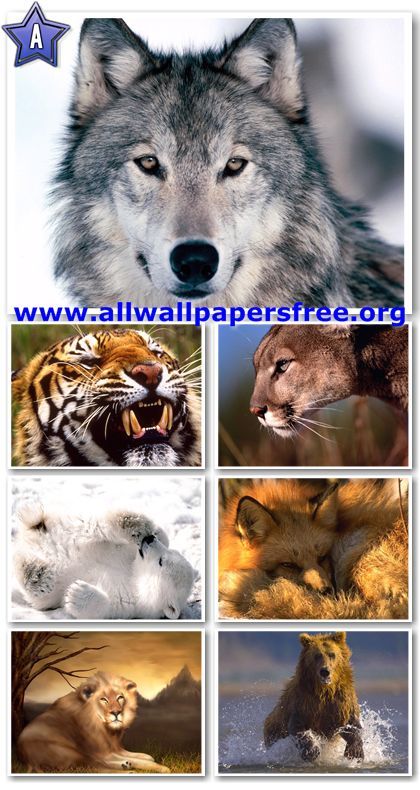 60 Amazing Wildlife Predators Wallpapers 1600 X 1200 [Set 2]