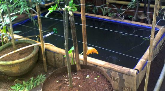 Kolam Pengembangan Bibit Ikan Patin, cikal bakal ide awalnya