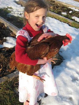 We Loved Our Chickens...So Did the Weasel