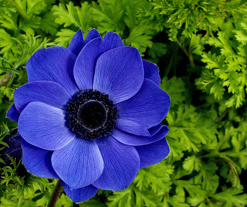 The 10 Most Beautiful Flowers In The World - the top ten list