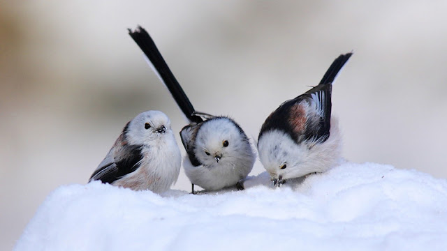 cute snow birds
