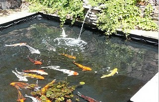 Best fish ponds fish pond liners for Best koi pond liner