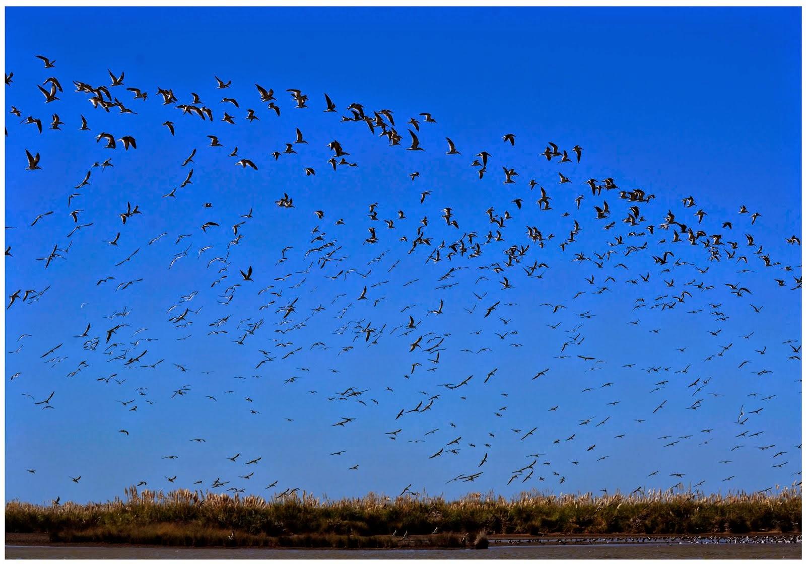 Punta Rasa -aves migratorias