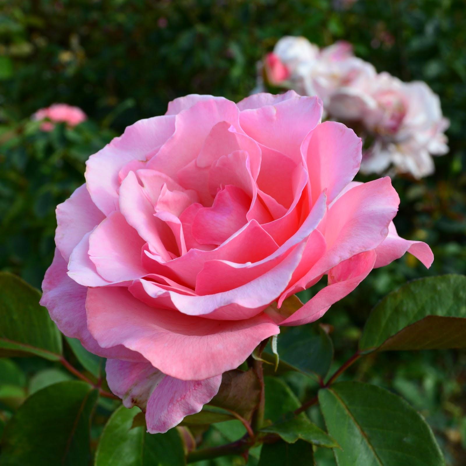 cozy birdhouse | los angeles exposition park rose garden