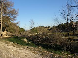 Valdegurriana árbol tirado Zaragoza