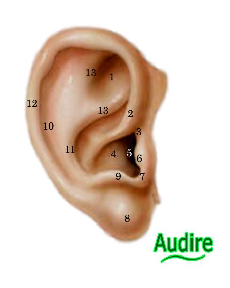 Audire: Anatomía del Oido Externo