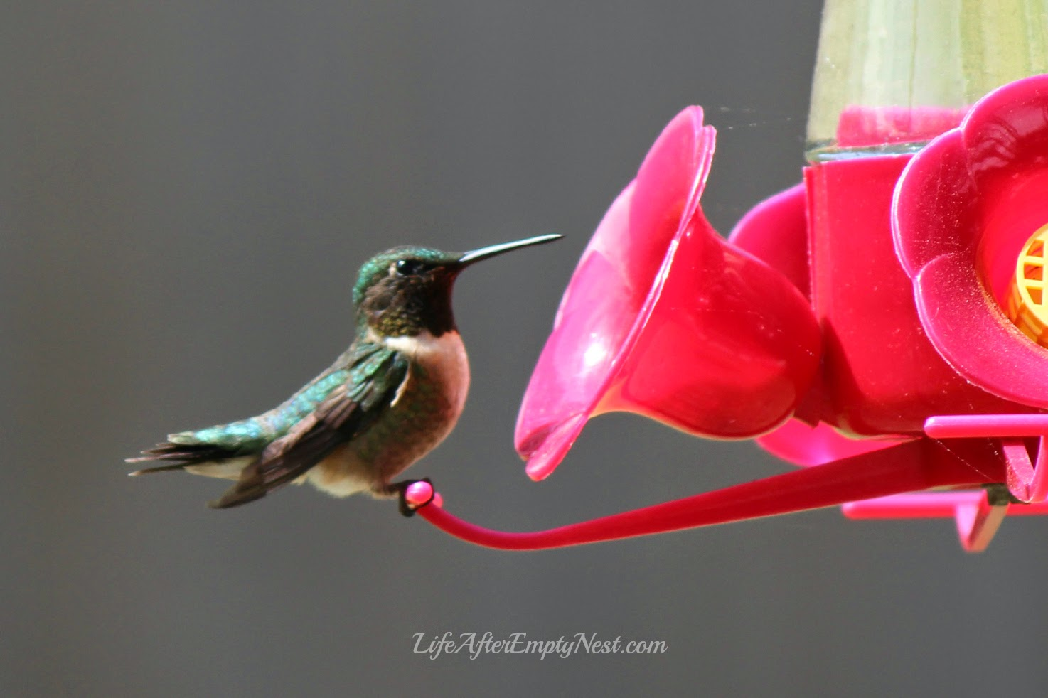 Life is all about taking the time to discover the miracles in each new day. #hummingbird
