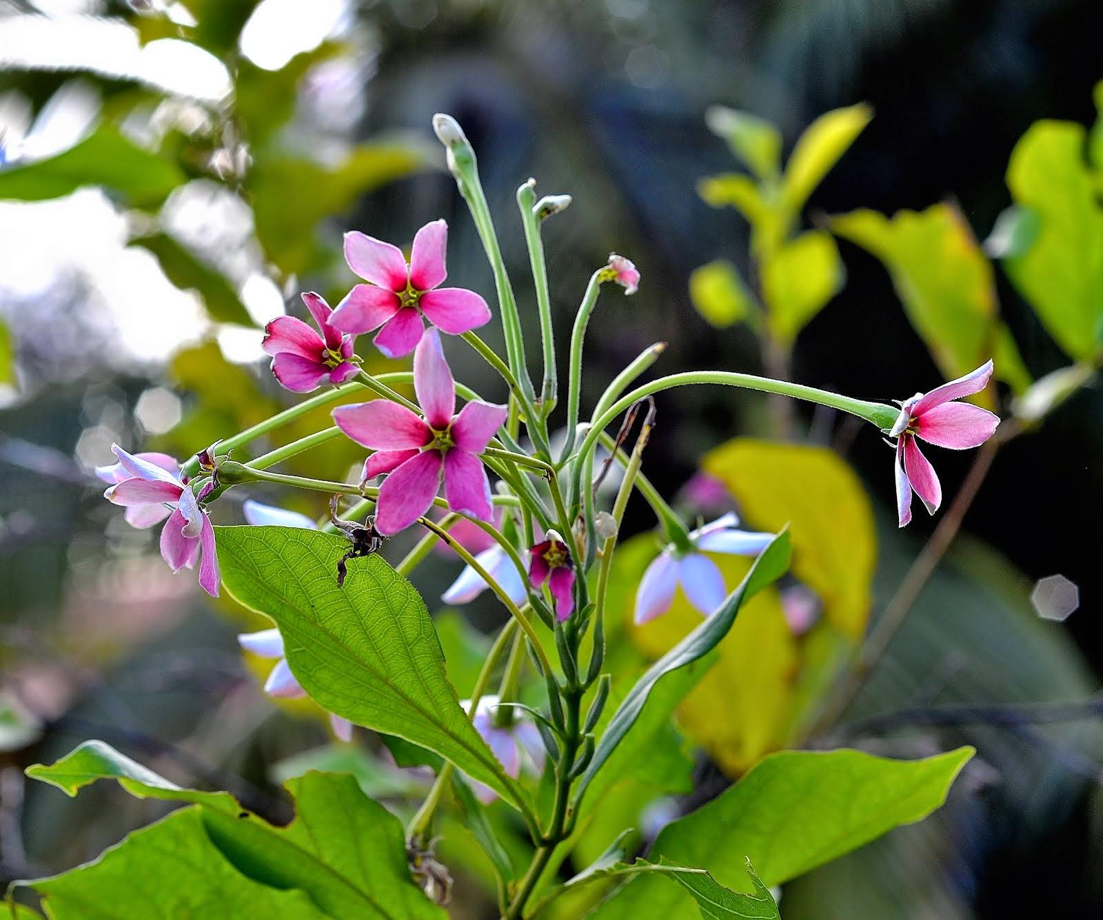 De somptueux ouvrages se lisent sur les pétales des fleurs sauvages, à jamais gravés dans l'infime.