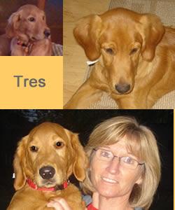 In Memory of Tres (Argus)