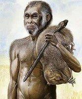 gambar manusia purba meganthropus palaeojavanicus