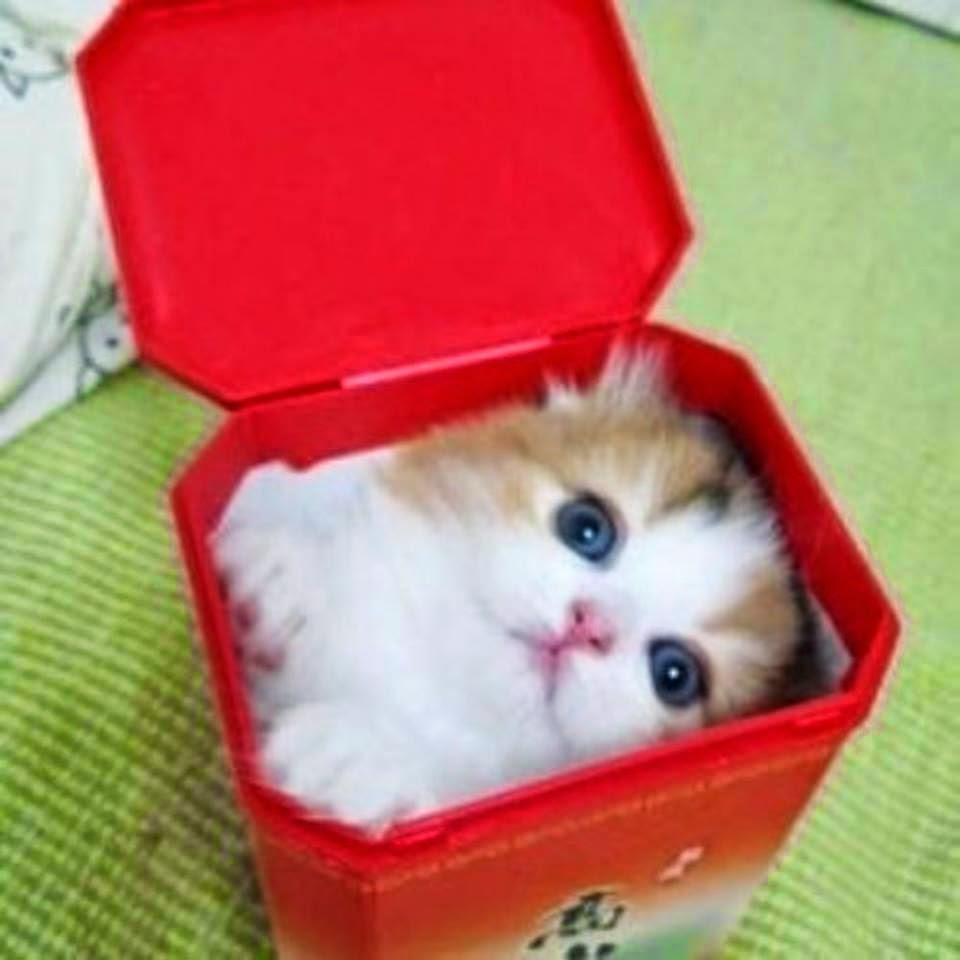 cutest cat on web