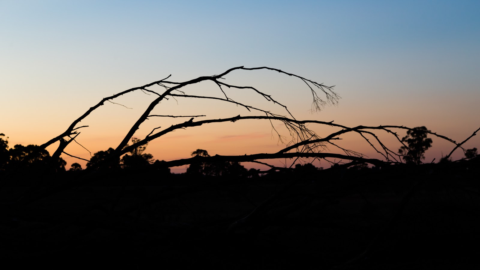 silhouette of tree branch setting sun