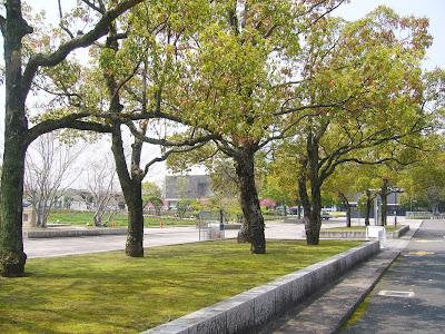 大阪府・万博記念公園 並木