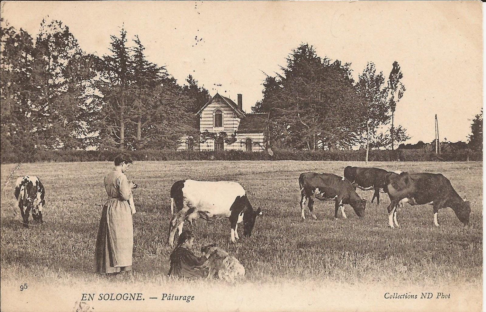 Le Pavillon Vert - Cour-Cheverny